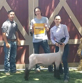 Petersen Club Lambs | Winners